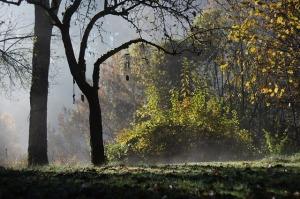 autumn-1042621_640